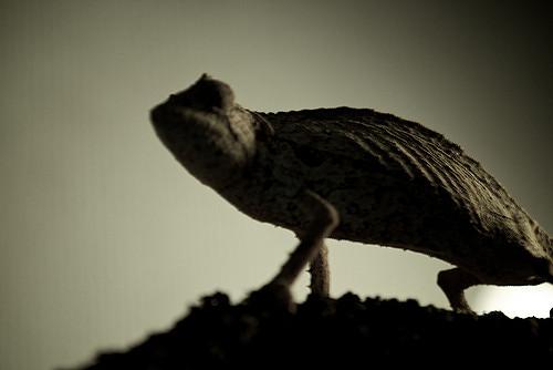 Chameleon dreamer by Satoshi Tomiyama