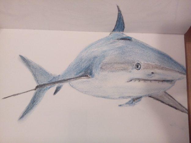 Shark by Angela van Son